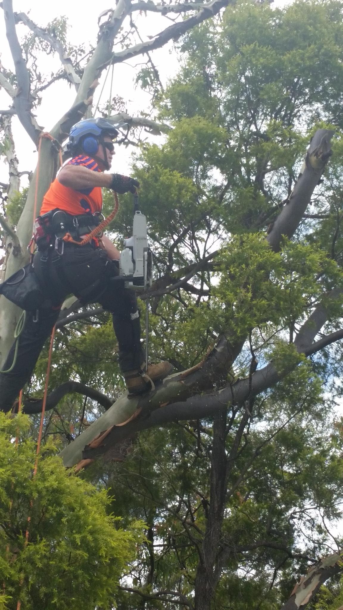 Arborist Gold Coast