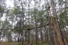 Tree lopping Gold Coast