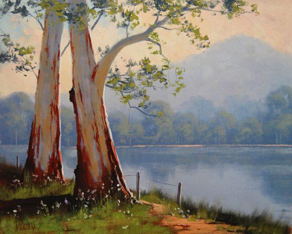 gum-trees-on-river