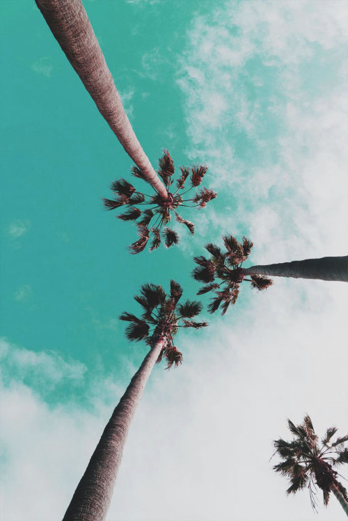large-palm-trees