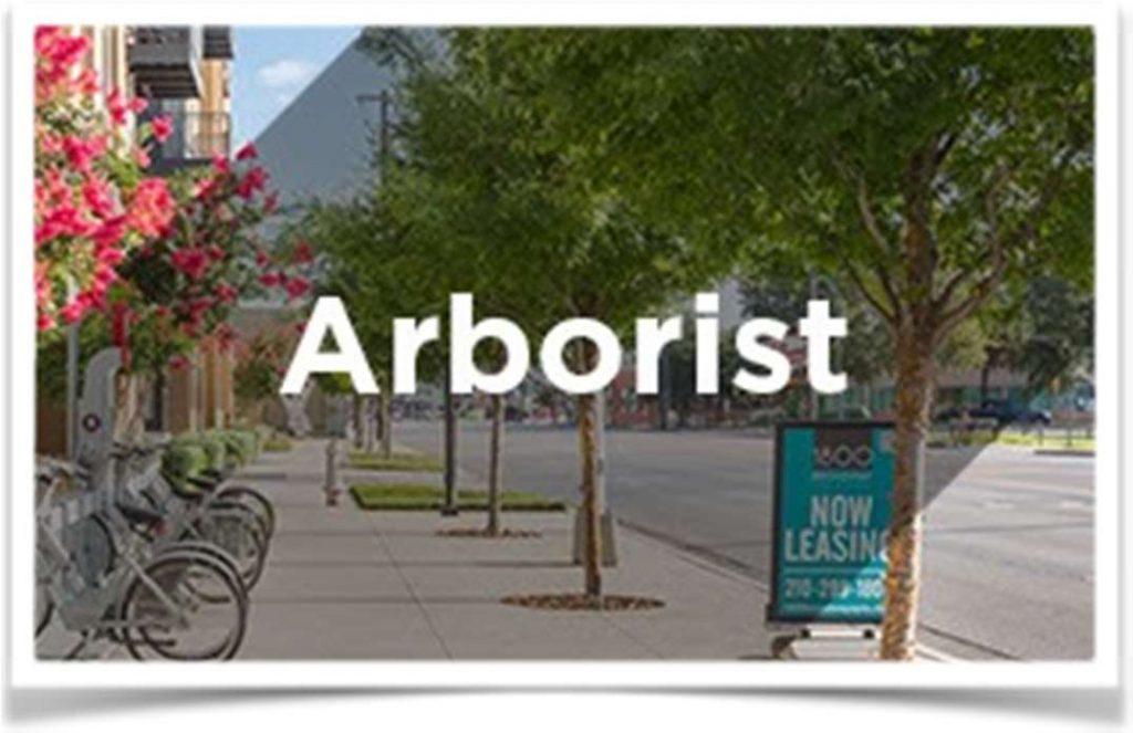 Arborist - Aussie Tree Care