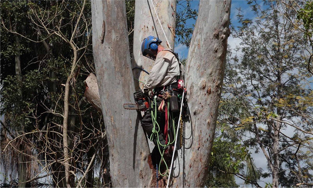 Tree removal Gold Coast