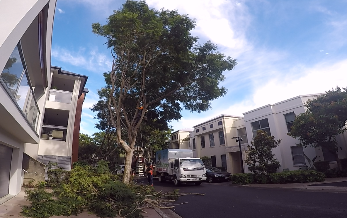 After tree pruning Gold Coast