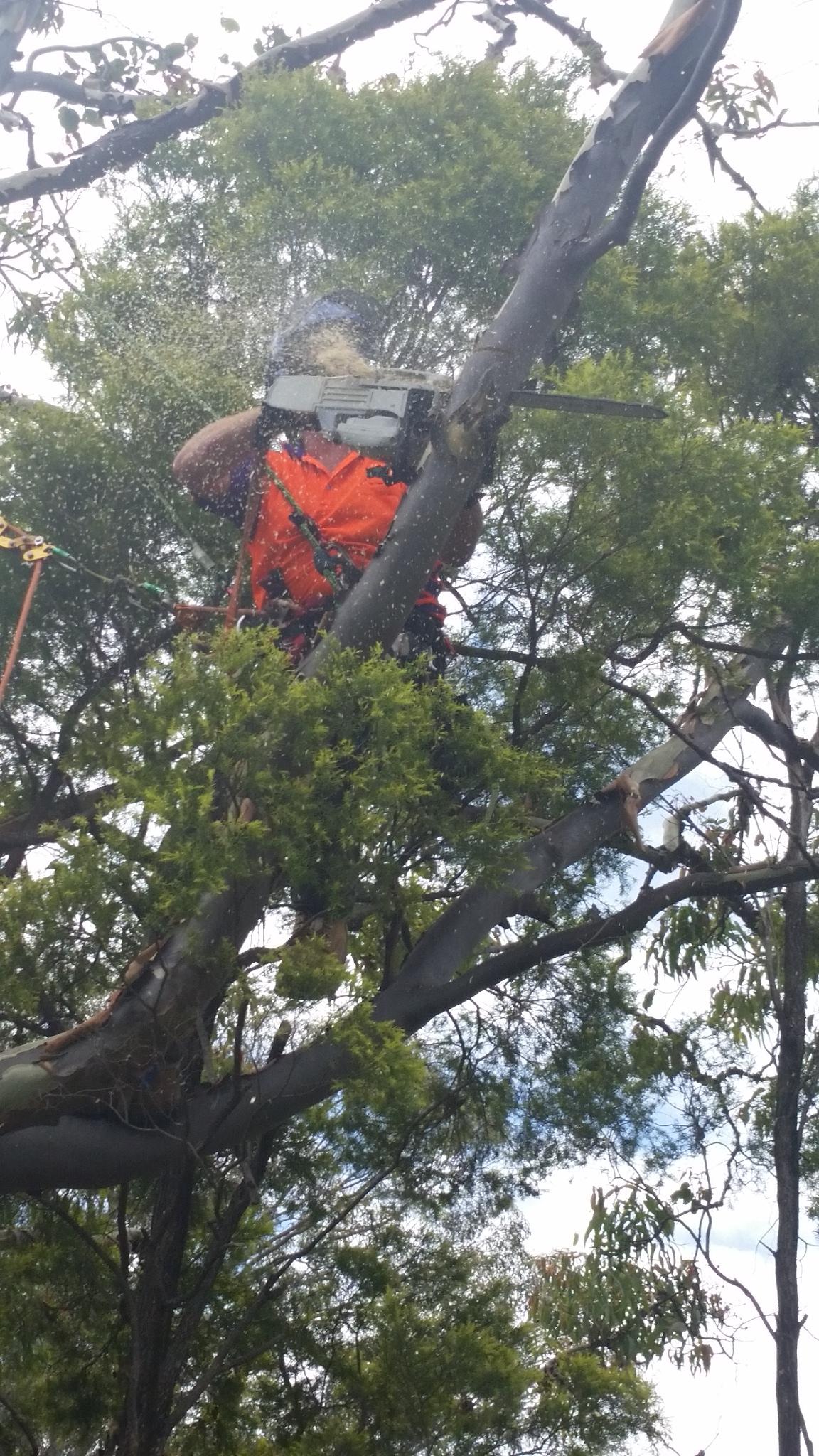 Tree lopping Logan