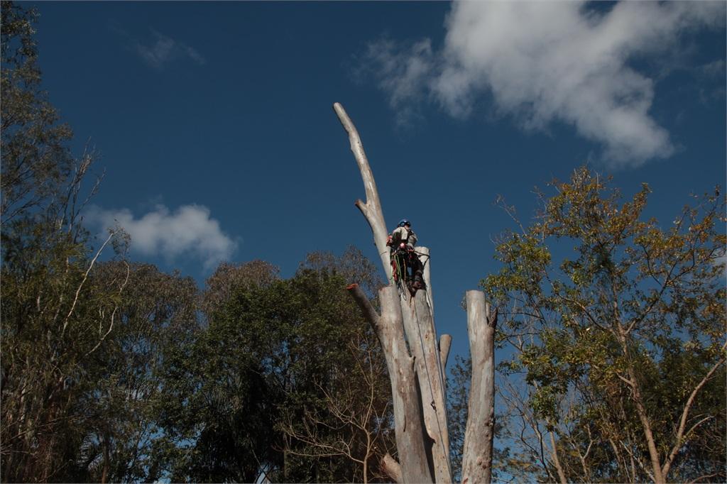 Tree removal Logan