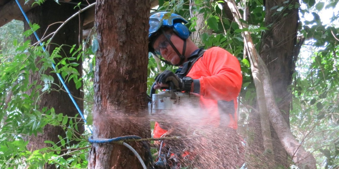 Tree Lopper Gold Coast