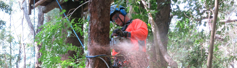 Tree removal Gold Coast