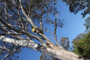 Logan tree lopper