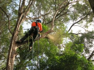 Logan tree lopping