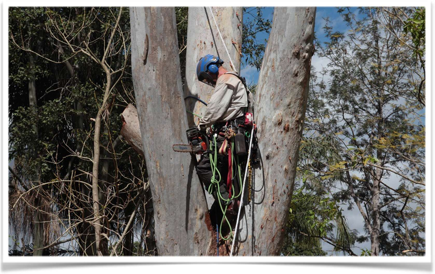 Business Profile - Aussie Tree Care