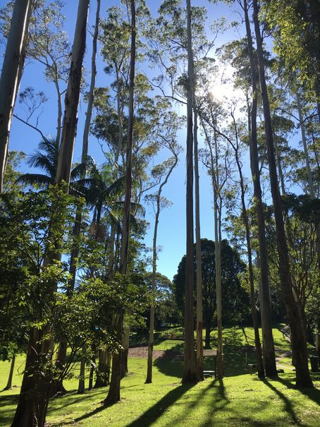 Aussie Tree Care, small tree removal cost, tree service cost, tree cutting service cost, cut tree cost, tree clearing cost, cost of tree felling, cost of removing trees, Gold Coast, Ormeau, Kingsholme, Willow Vale, Norwell, Jacobs Well, Coomera, Pimpama, Wongawallan, Tamborine Mountain, Helensvale, Pacific Pines, Nerang, Brisbane, Yatala, Stapylton, Carbrook, Shailer Park, Loganholme, Slacks Creek, Browns Plains, Chambers Flat, Redl Bay, Logan Village, YarraBilba, Cedar Creek, Beenleigh