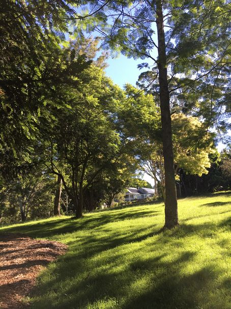 Aussie Tree Care, cost of large tree removal, cost of tree cutting, cost to take down a tree, cost to have a tree removed, cost to have tree removed, tree removal cost average, Gold Coast, Ormeau, Kingsholme, Willow Vale, Norwell, Jacobs Well, Coomera, Pimpama, Wongawallan, Tamborine Mountain, Helensvale, Pacific Pines, Nerang, Brisbane, Yatala, Stapylton, Carbrook, Shailer Park, Loganholme, Slacks Creek, Browns Plains, Chambers Flat, Redl Bay, Logan Village, YarraBilba, Cedar Creek, Beenleigh