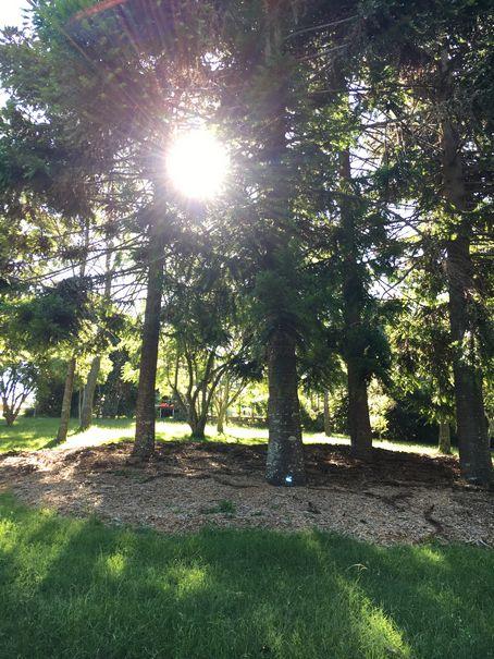 Aussie Tree Care, tree work cost, pruning trees, tree pruning service, pruning a tree, palm tree pruning, proper tree pruning, pruning of trees, tree pruning saw, Gold Coast, Ormeau, Kingsholme, Willow Vale, Norwell, Jacobs Well, Coomera, Pimpama, Wongawallan, Tamborine Mountain, Helensvale, Pacific Pines, Nerang, Brisbane, Yatala, Stapylton, Carbrook, Shailer Park, Loganholme, Slacks Creek, Browns Plains, Chambers Flat, Redl Bay, Logan Village, YarraBilba, Cedar Creek, Beenleigh