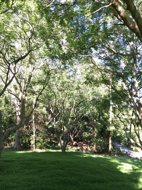 Aussie Tree Care, tree surgeons, the tree surgeon, tree surgeon jobs, find a tree surgeon, tree surgeon cost, tree surgeon near me, tree surgeon prices, tree surgeon quotes, Gold Coast, Ormeau, Kingsholme, Willow Vale, Norwell, Jacobs Well, Coomera, Pimpama, Wongawallan, Tamborine Mountain, Helensvale, Pacific Pines, Nerang, Brisbane, Yatala, Stapylton, Carbrook, Shailer Park, Loganholme, Slacks Creek, Browns Plains, Chambers Flat, Redl Bay, Logan Village, YarraBilba, Cedar Creek, Beenleigh