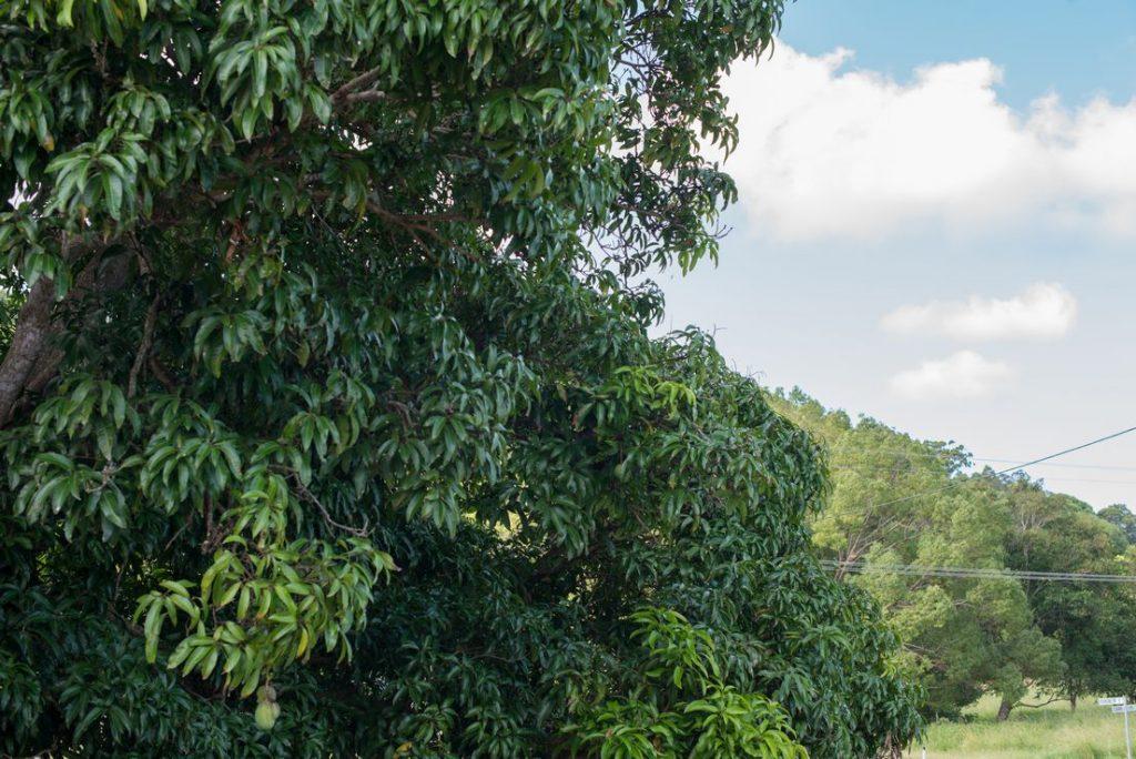 Aussie Tree Care, tree trimming service reviews, tree removal prices, tree service prices, tree felling prices, tree cutting service prices, tree lopping prices, Gold Coast, Ormeau, Kingsholme, Willow Vale, Norwell, Jacobs Well, Coomera, Pimpama, Wongawallan, Tamborine Mountain, Helensvale, Pacific Pines, Nerang, Brisbane, Yatala, Stapylton, Carbrook, Shailer Park, Loganholme, Slacks Creek, Browns Plains, Chambers Flat, Redl Bay, Logan Village, YarraBilba, Cedar Creek
