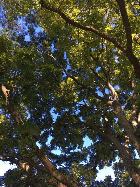 Aussie Tree Care, find a certified arborist, arborist cost, city arborist, find local arborist, arborist jobs, arborist in my area, arborist award, arborist degree, Gold Coast, Ormeau, Kingsholme, Willow Vale, Norwell, Jacobs Well, Coomera, Pimpama, Wongawallan, Tamborine Mountain, Helensvale, Pacific Pines, Nerang, Brisbane, Yatala, Stapylton, Carbrook, Shailer Park, Loganholme, Slacks Creek, Browns Plains, Chambers Flat, Redl Bay, Logan Village, YarraBilba, Cedar Creek, Beenleigh